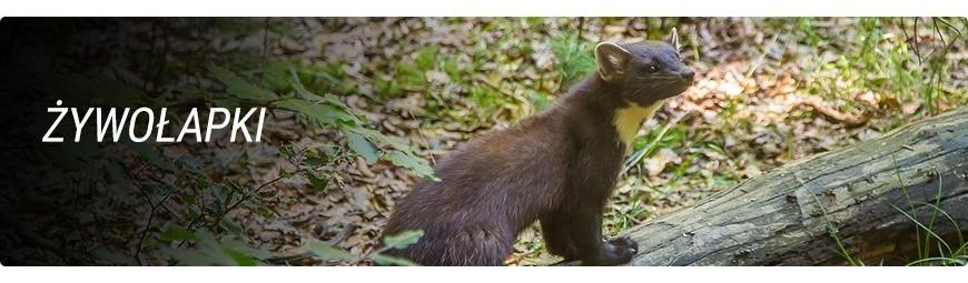 Żywołapki - pułapki na kuny, lisy, myszy, szczury, koty, wydry, bobry - dzikaknieja.pl